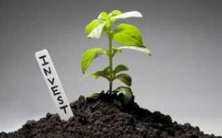 Бизнес план инвестиционной компании